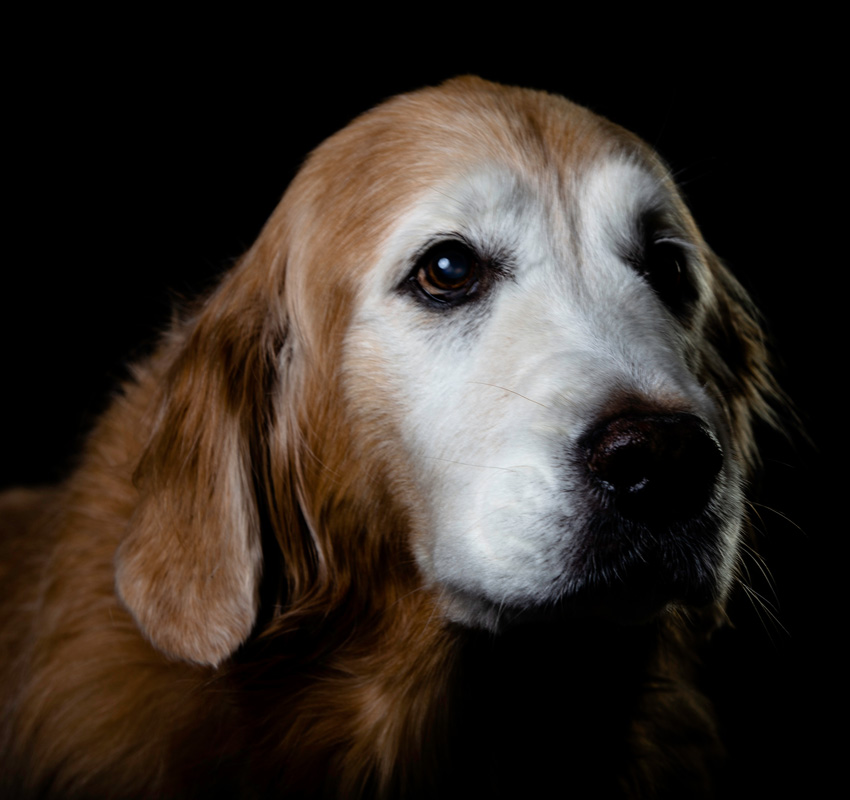 Image of a senior dog.